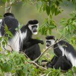 14Days-Explore Rwanda Uganda